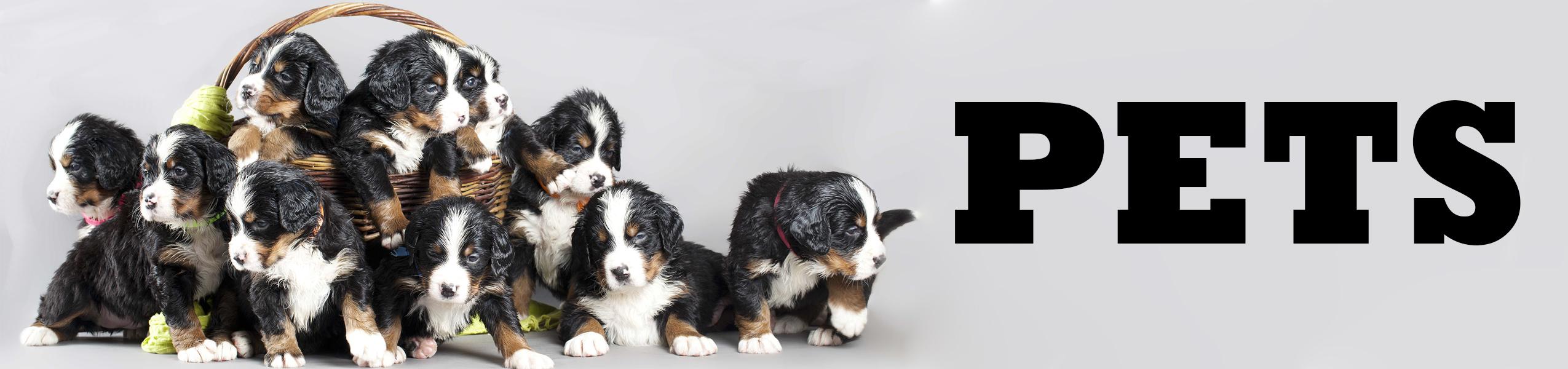 Pets Binge Box