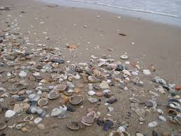 Where Did that Seashell Come From? The Unsung Heroes of Our Beaches